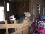 Kik projekt Wile farm